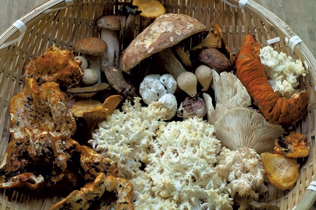 Wild mushrooms - FILE: HANNAH PALMER EGAN