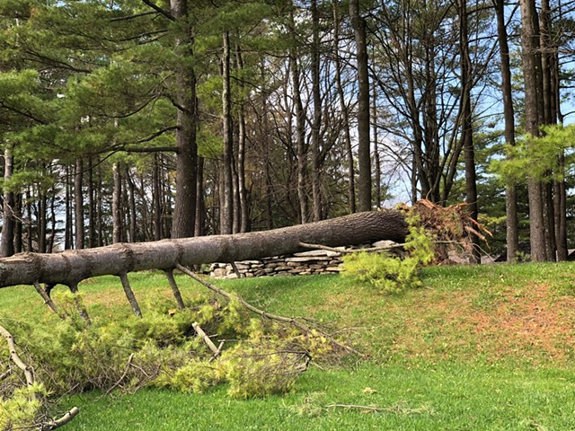 A fallen tree at Shelburne Museum - COURTESY OF SHELBURNE MUSEUM