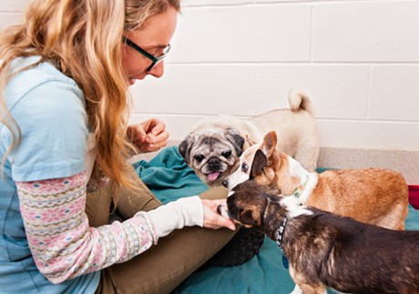 A volunteer treats Fat Jack, Trouble and Buddy to a treat at the Humane Society of Chittenden County - KELLY SCHULZE (MOUNTAIN DOG PHOTOGRPAHY)