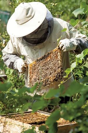 Beekeeper inspecting beehive - DREAMSTIME.COM | SZYMON KACZMARCZYK
