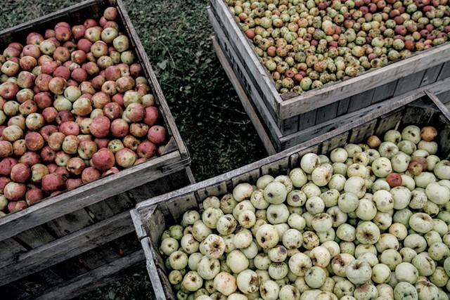 Crates of found apples - COURTESY OF SHACKSBURY