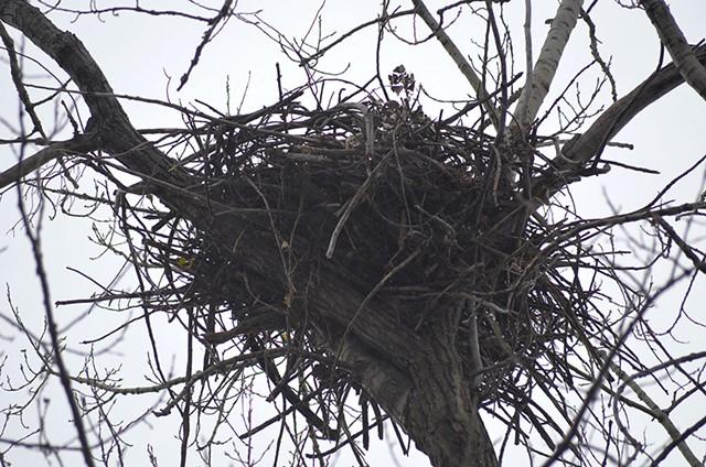 The eagle's nest - SASHA GOLDSTEIN