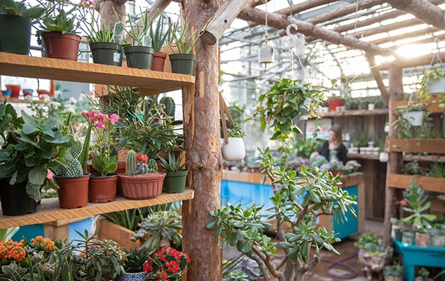 Potted plants at Gardener's Supply in Williston - JAMES BUCK