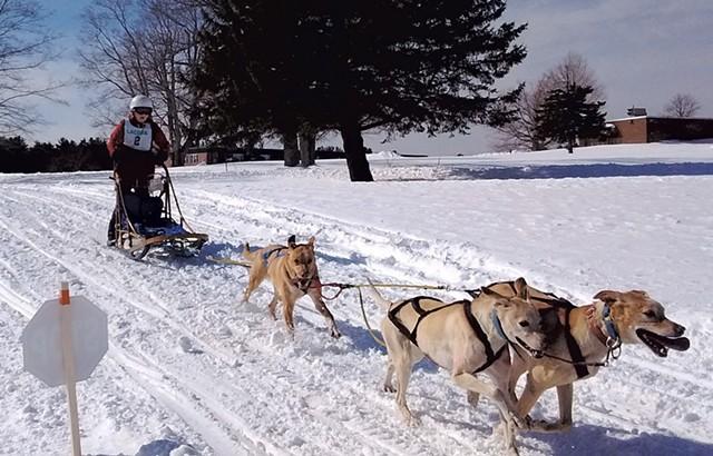 Kayleigh DiMaggio races Eurohounds - COURTESY OF KAYLEIGH DIMAGGIO