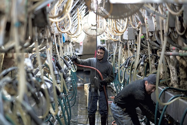 Farmworkers Victor Diaz and Ivan Dominguez in the milking parlor - CALEB KENNA