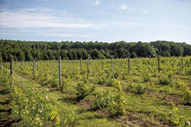 Snow Farm Vineyard - OLIVER PARINI