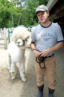 Ian Lutz moving a male alpaca to the barn for breeding - HANNAH PALMER EGAN