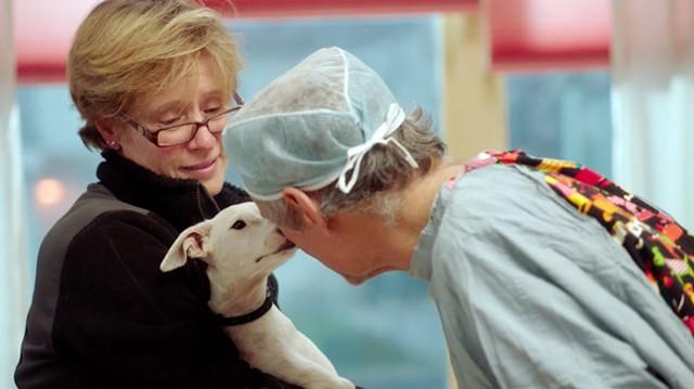 The Dog Doc - COURTESY PHOTO