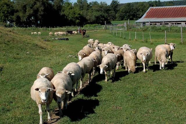 Parsons' Farm in Richford - COURTESY OF PARSONS' FARM