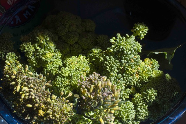 Broccoli - HANNAH PALMER EGAN