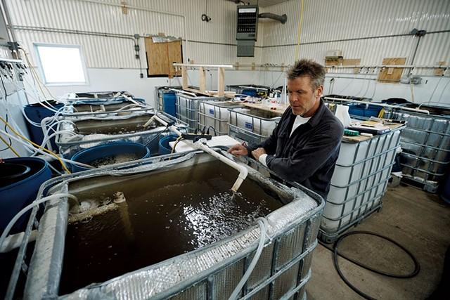 John Brawley with his shrimp nursery tanks - BEAR CIERI