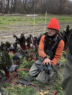 Andy Jones teaching volunteers to harvest chard at Intervale Community Farm - JORDAN BARRY