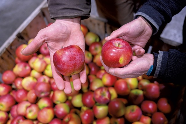Champlain Orchards apples - CALEB KENNA