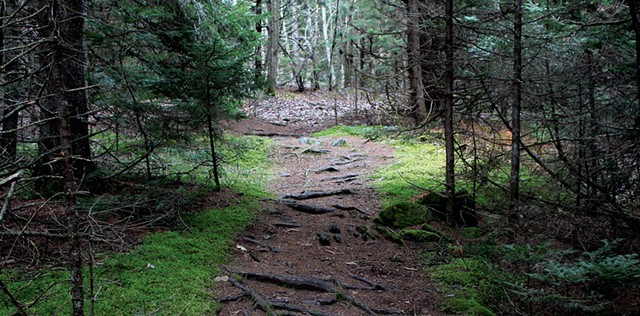A path through woods at Barr Hill Natural Area - TRISTAN VON DUNTZ