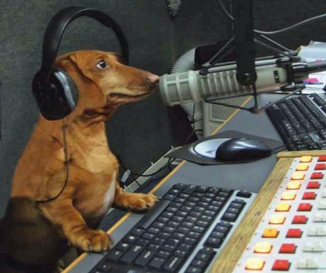 Hobbes in the WVTK studio in 2012 - FILE PHOTO COURTESY OF BRUCE ZEMAN