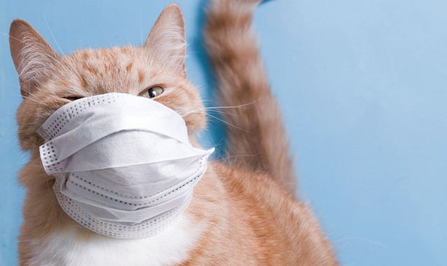 teaser-pandemiccat20.jpg