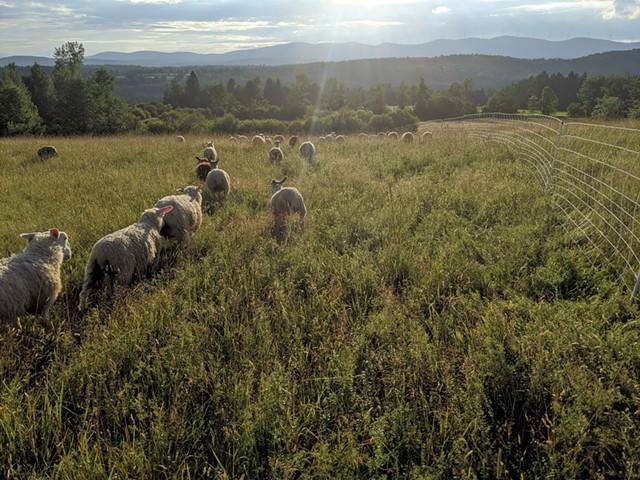 Vermont Open Farm Week - COURTESY OF OPEN FARM WEEK