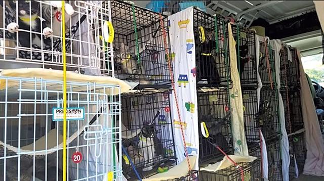 Kitten transport van - COURTESY OF THE HUMANE SOCIETY OF CHITTENDEN COUNTY