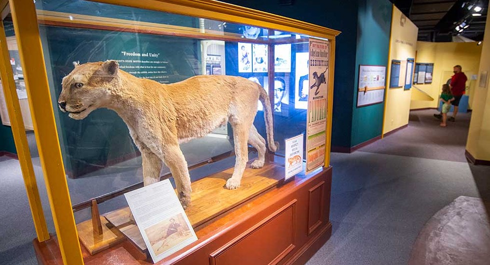 A stuffed catamount at the Vermont History Museum - JEB WALLACE-BRODEUR