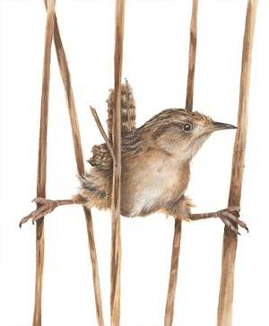 """Sedge Wren"" by Linda Mirabile - COURTESY OF HIGHLAND CENTER FOR THE ARTS"
