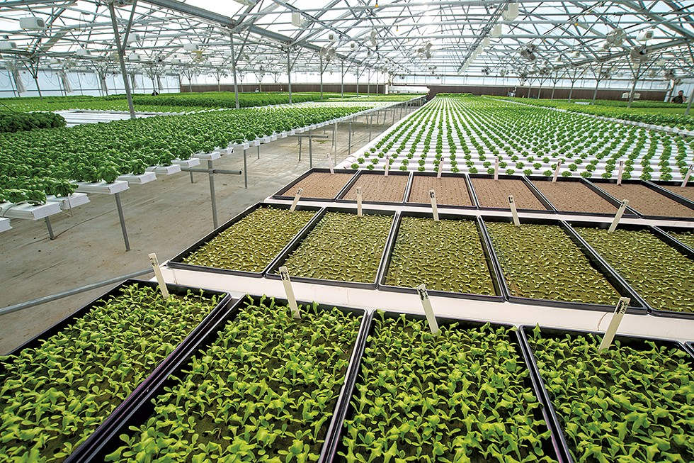 Green Mountain Harvest Hydroponic - JEB WALLACE-BRODEUR