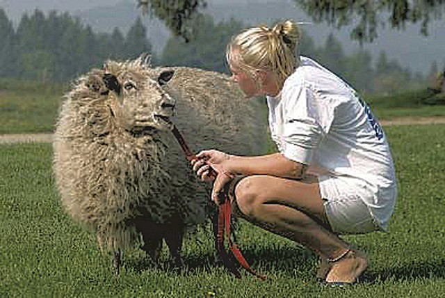 A guest with a sheep from the animal sanctuary - COURTESY OF DAVID BROOKS
