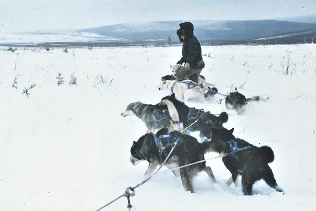 Bathsheba Demuth with sled dogs - COURTESY OF THE GUND INSTITUTE