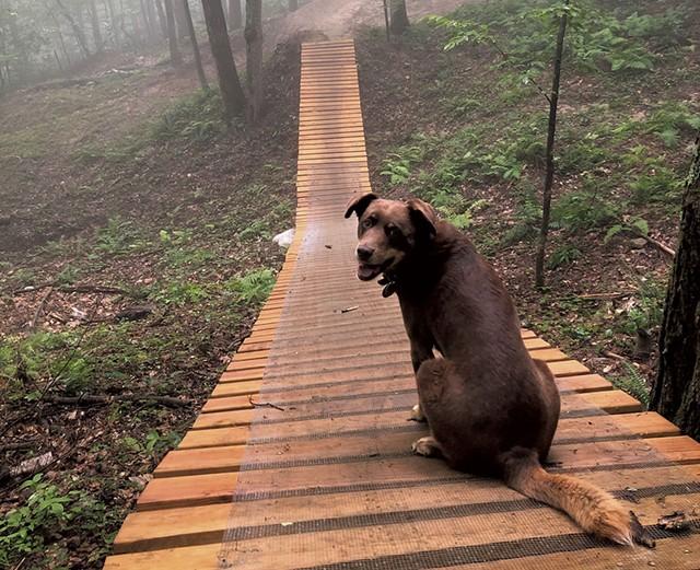 Wiley the dog at Cochran's - COURTESY OF BETSY CABRERA