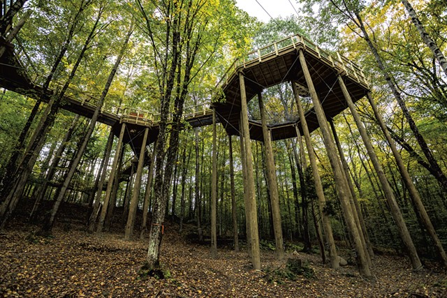Forest Canopy Walk - FILE: TOM MCNEILL