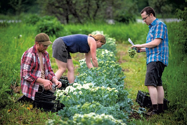Left: Graham Unangst-Rufenacht, Sarah Skelding and Aaron Guman harvesting sea kale - GLENN RUSSELL