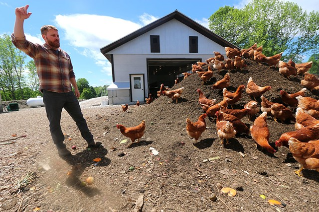 Kurt Ericksen of Vermont Compost checking on his flock of laying hens feeding on compost outside their new barn - KEVIN MCCALLUM ©️ SEVEN DAYS