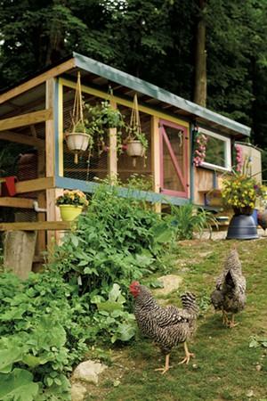 Michelle Fongemie's backyard chicken coop in Hinesburg - BEAR CIERI