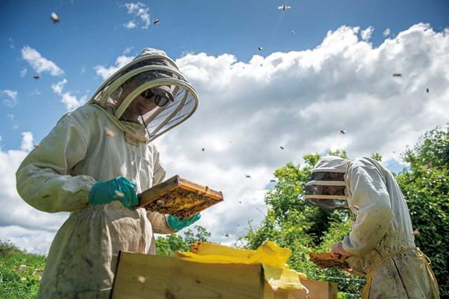 Romy and Andrew Munkres of Lemon Fair Honeyworks searching for queen bees - DARIA BISHOP