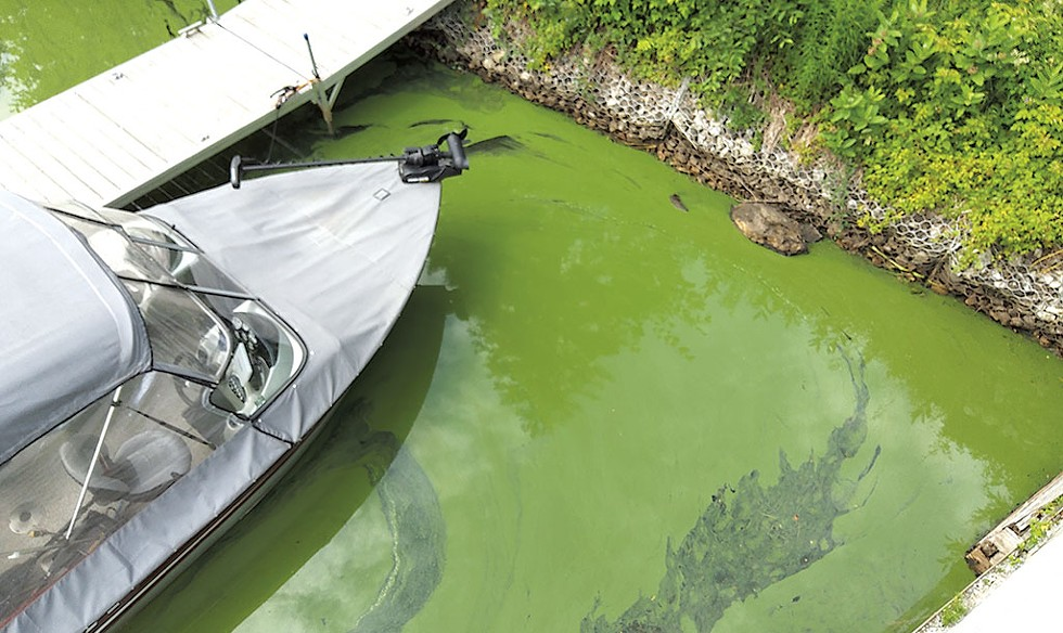 An algae bloom earlier this month in Fitch Bay - COURTESY OF ROBERT BENOIT