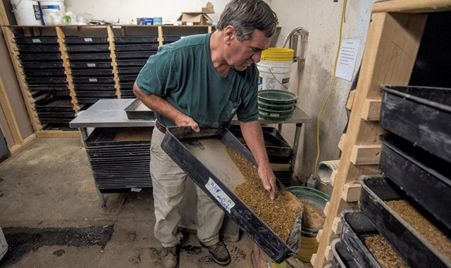 Bob Simpson sifting trays of mealworms to separate the frass - JEB WALLACE-BRODEUR