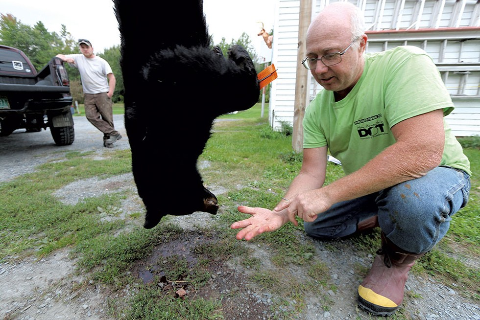 David McLam, who processes game in Bradford, showing a molar removed from a bear that will be submitted to state biologists - JEB WALLACE-BRODEUR