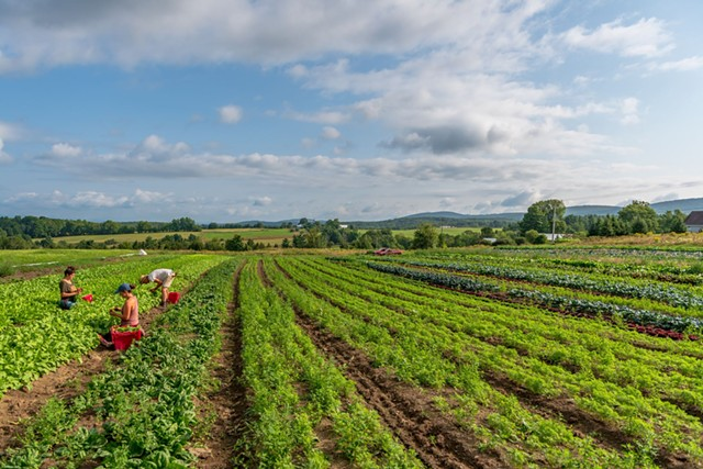 Bear Roots Farm in South Barre and Williamstown has participated in VLT's Farmland Access Program - COURTESY PAUL E. RICHARDSONN