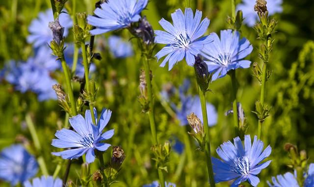 Perennial Harvest Days - © RUBIK OLEG | DREAMSTIME