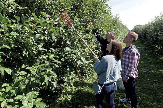 Pickers at Burrt's Apple orchard in Cabot - JEB WALLACE-BRODEUR