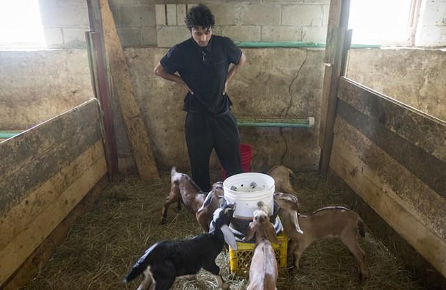 Yam Tiwari feeds baby goats - JAMES BUCK
