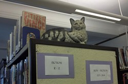Shirley Jackson's cat in the library - RACHEL ELIZABETH JONES