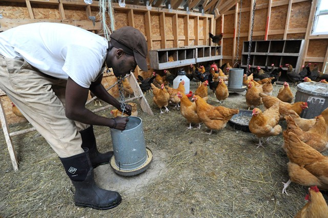 Sterling College student Tofowa Pyle tends to chickens on the school's farm - JEB WALLACE-BRODEUR