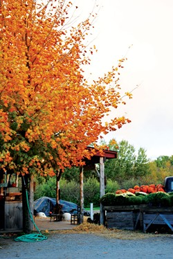 Shelburne Orchards - CHARLOTTE SCOTT