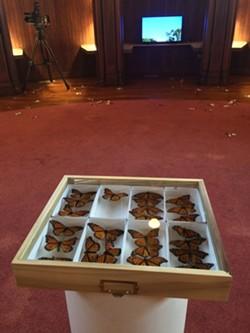 Monarch specimens - RACHEL JONES
