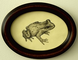 """""""New Frog"""" - COURTESY OF BRIAN COLLIER"""
