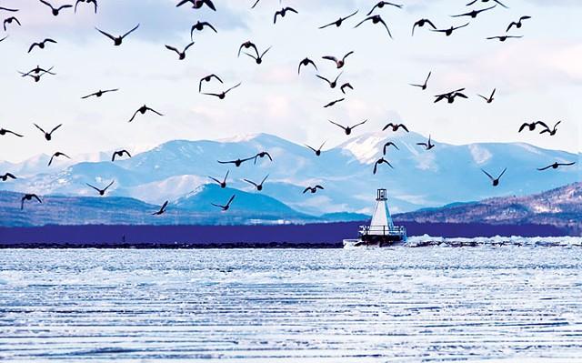 Frozen Lake Champlain at Burlington's Waterfront Park - HOMER HOROWITZ