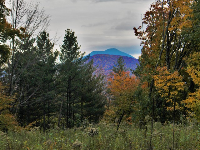 View of Camel's Hump from the land proposed for Richmond town forest - COURTESY PHOTO BY OLIVIA WOLF