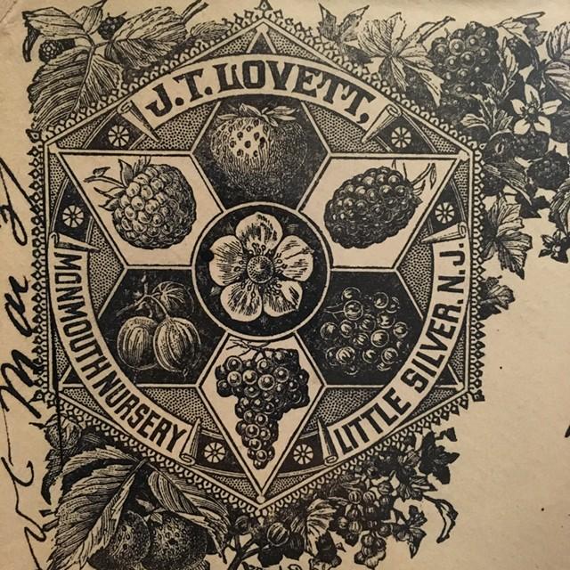J.T. Lovett seed ephemera illustration - RACHEL JONES