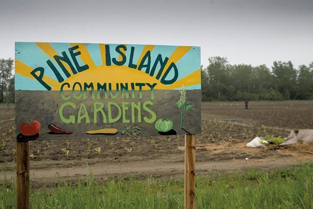 Pine Island Community Farm - JAMES BUCK
