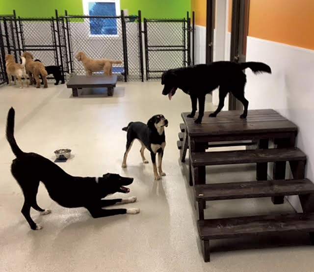 Dogs playing at Happy Tails Pet Resort and Spa - COURTESY OF HAPPY TAILS PET RESORT AND SPA